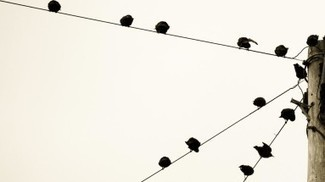 What Makes an Organization 'Networked'?   networks and network weaving   Scoop.it