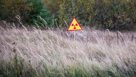 Tchernobyl est devenu… une réserve naturelle ! - Fondation 30 Millions d'Amis | Nature Animals humankind | Scoop.it