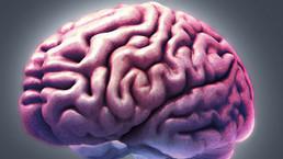 Identifican parte del cerebro que nos hace humanos - BBC Mundo - Noticias | Medicina | Scoop.it