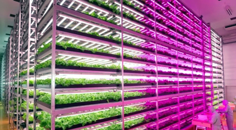 World's Largest 'Vegetable Factory' Revolutionizes Indoor Farming » EcoWatch | Business as an Agent of World Benefit | Scoop.it