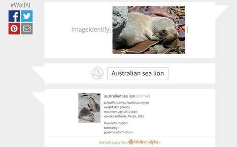 ¿Has probado el nuevo sitio de reconocimiento de imágenes de Wolfram Alpha? | Herramientas para objetos de aprendizaje | Scoop.it