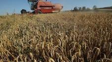 L'Egypte achète 60,000 T de blé américain | Égypt-actus | Scoop.it