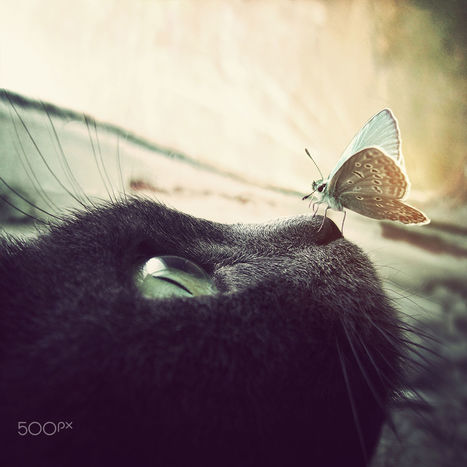 butterflie | I didn't know it was impossible.. and I did it :-) - No sabia que era imposible.. y lo hice :-) | Scoop.it