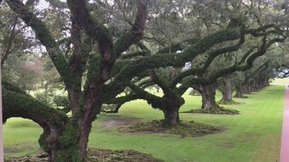Tweet from @Randy2657 | Oak Alley Plantation: Things to see! | Scoop.it