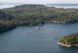 A British Columbia Salmongate? - Fly Fisherman | Canadian Provinces and Territories | Scoop.it