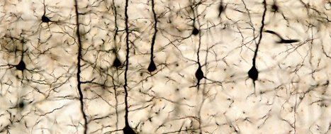 Consciousness could be a side effect of 'entropy', say researchers   Philosophy everywhere everywhen   Scoop.it