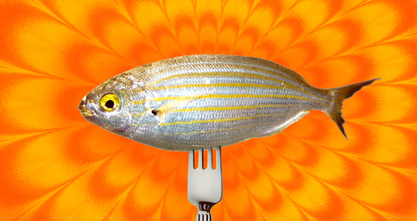 Fin to Get High? Eating Sarpa Salpa Fish Can Induce LSD-Like Hallucinations | health | Scoop.it