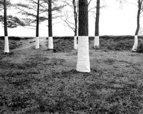 Zander :: Tree, Line.   CRAW   Scoop.it