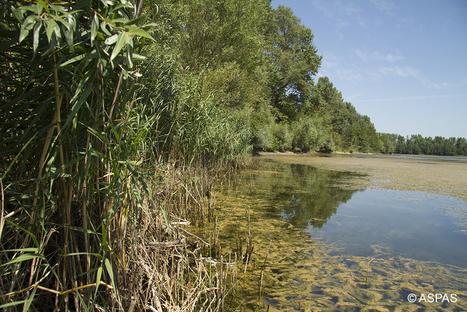 Des réserves de vie sauvage privées pour protéger la nature en France - Magazine GoodPlanet Info | économie et tourisme responsable | Scoop.it