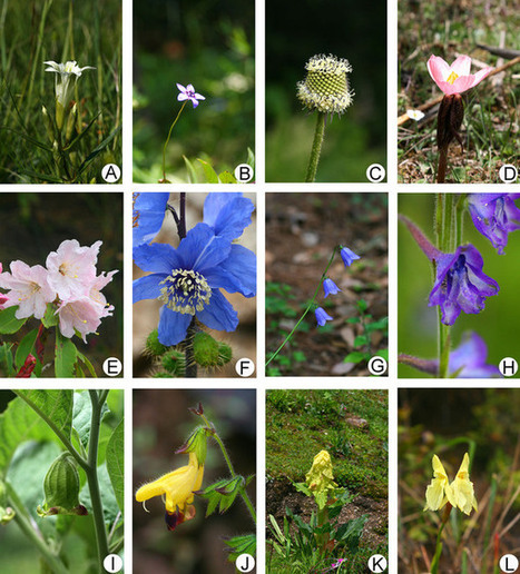 Pollen sensitivity to ultraviolet-B (UV-B) suggests floral structure evolution in alpine plants | PlantBioInnovation | Scoop.it