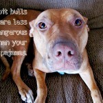 Your Pajamas Are More Dangerous Than A Pit Bull | Animals R Us | Scoop.it
