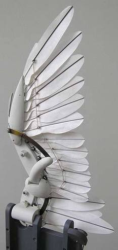 The Automata Blog: Incredible mechanical bird wing with individual feathers folds and flaps | automata and automatons | Scoop.it