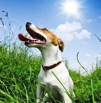 Dog Clothing For Spring | Dog Fashion | Scoop.it