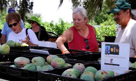 It's all about mangoes at at Colorfield Farms | Annie Haven | Haven Brand | Scoop.it