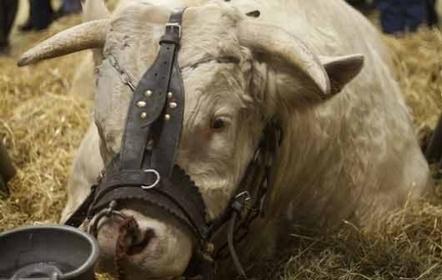 [video] Le SIA met les nouvelles technologies agricoles à l'honneur   agro-media.fr   Actualité de l'Industrie Agroalimentaire   agro-media.fr   Scoop.it