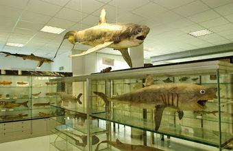 Il Museo Del Mare di San Benedetto Del Tronto: sei musei in uno | Le Marche un'altra Italia | Scoop.it