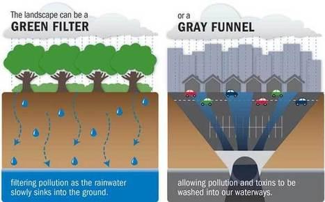 Dead Zones - Nitrogen & Phosphorus Pollution - Chesapeake Bay Foundation | Chesapeake Bay Resources | Scoop.it