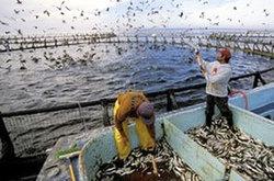 Tunisie-Economie: Une stratégie pour impulser la production aquacole   aquacultures   Scoop.it