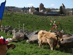 Aveyron 23 mai 2010 aubrac transhumance | Aveyron | Scoop.it