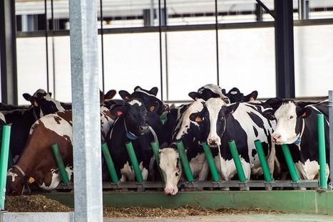 """Elevage animal industriel : un risque pour les investisseurs   """"Conférence environnementale et transition énergétique""""   Scoop.it"""