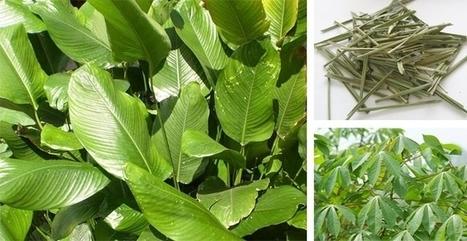 Vdeltagoods,vietnam export company, vietnam export centre, vietnam agricultural export-Coconut Products | Rice husk pellet - briquette | Scoop.it
