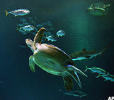 10 Places to See Sea Turtles - MainStreet | Cabo San Lucas | Scoop.it