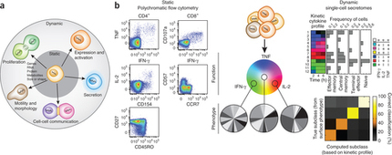 Single-cell technologies for monitoring immune systems : Nature Immunology | High Content Screening | Scoop.it