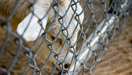 Failed backyard farms lead to growing number of homeless animals | Vertical Farm - Food Factory | Scoop.it