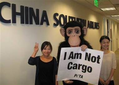 China Southern Airlines continues cruelty to monkeys | Nature Animals humankind | Scoop.it