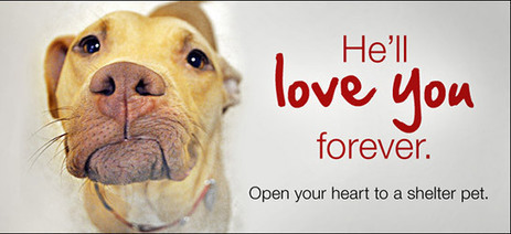 This Valentine's Day, Open Your Heart to a Shelter Pet | Steve Monahan | Scoop.it