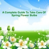 A Complete Guide To Take Care Of Spring Flower Bulbs | Flower Bulbs | Scoop.it