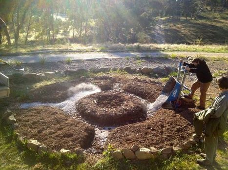 Permaculture - Micro Forest Gardening. Designing a Food Forest for Small Spaces. Great for Urban Homesteading and Farm - Gardening Life Today | agroforesterie, agroecologie | Scoop.it