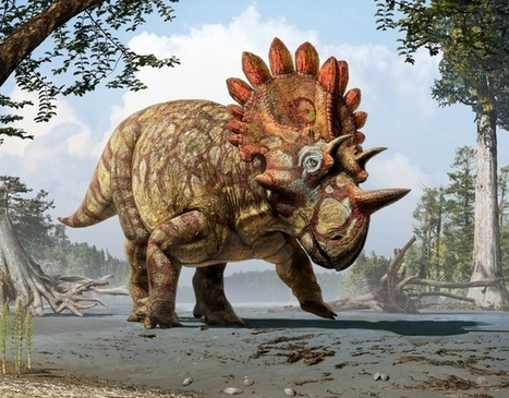 This New Dinosaur Is Like Triceratops with a Massive Kickass Crown | Archivance - Miscellanées | Scoop.it