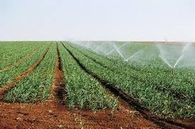 Algérie : Une commission d'inspection pour évaluer la réalisation des projets agricoles à Illizi - Maghreb Emergent | Agriculture et Alimentation méditerranéenne durable | Scoop.it