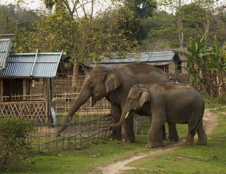 Battling the human-elephant conflict | Lorraine's Environmental Change &  Management | Scoop.it