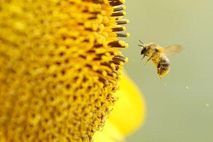 Combien vaut la nature? | Mariette Le Roux | Environnement | Abeilles, intoxications et informations | Scoop.it