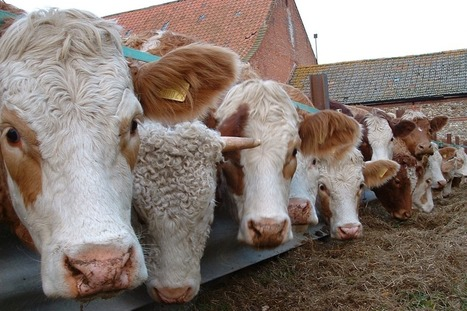 The FDA let risky antibiotics remain in livestock feed, new report claims | @FoodMeditations Time | Scoop.it
