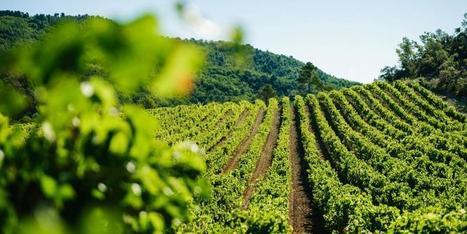 Le Fronton vise le label «Vignobles et Découvertes»   Haute-Garonne tourisme   Scoop.it
