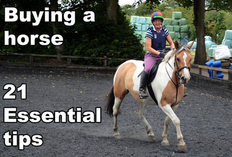 Buying a Horse or a Pony - 21 Essential Buying Tips | Farming and the Countryside | Scoop.it