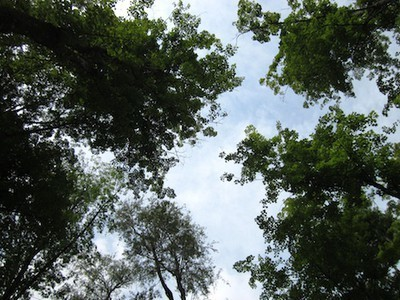 Trees Aren't Adapting to Climate Change as Predicted | adapting to climate change | Scoop.it