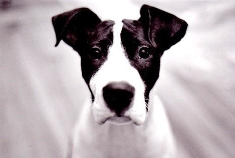 terapia conductual para perros hiperactivos o ... - TiendAnimal | Mas mascotas | Scoop.it