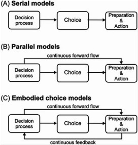 Embodied Choice: How Action Influences Perceptual Decision Making | Social Foraging | Scoop.it