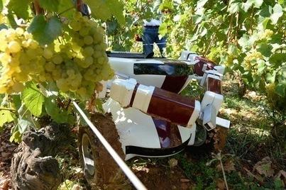 Un robot-vigneron vient rivaliser avec le travail manuel | La-Croix.com | Robotique de service | Scoop.it