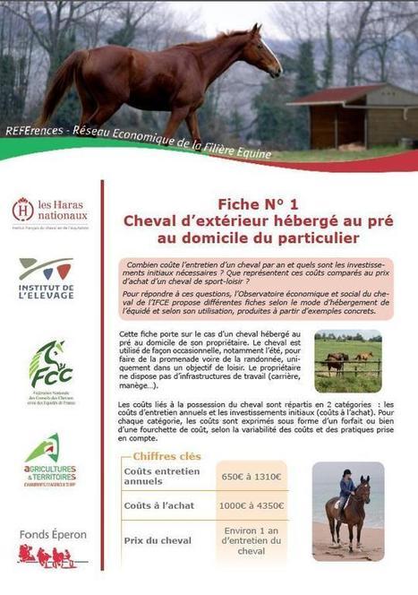 Actualités-Institut Français du cheval et de l'équitation   Actus Cheval   Scoop.it
