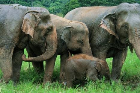 La Thaïlande : un pays pour vous tous: adultes, enfants et familles … | Circuits et voyage Thailande | Scoop.it