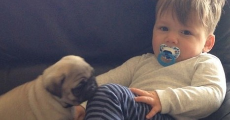 Your Heart Is Going to Explode at This Instagram Full of Baby Pugs and a Toddler | ♨ Family & Food ♨ | Scoop.it