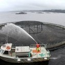 $7 million for salmon hub | Aquaculture Directo... | Global Aquaculture News | Scoop.it