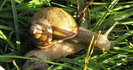 Des escargots au menu des Européens il y a 30000 ans | Bibliothèque des sciences de l'Antiquité | Scoop.it