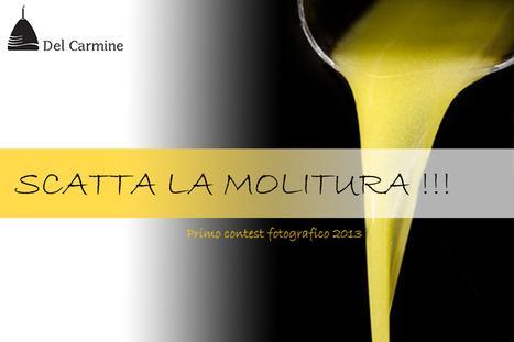 """""""Scatta La Molitura"""" nelle Marche   VitaDiGusto.IT   Scoop.it"""