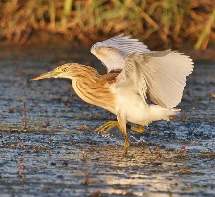 Zones humides - Ramsar - Océans | ZONES_HUMIDES ET AGRICULTURE | Scoop.it